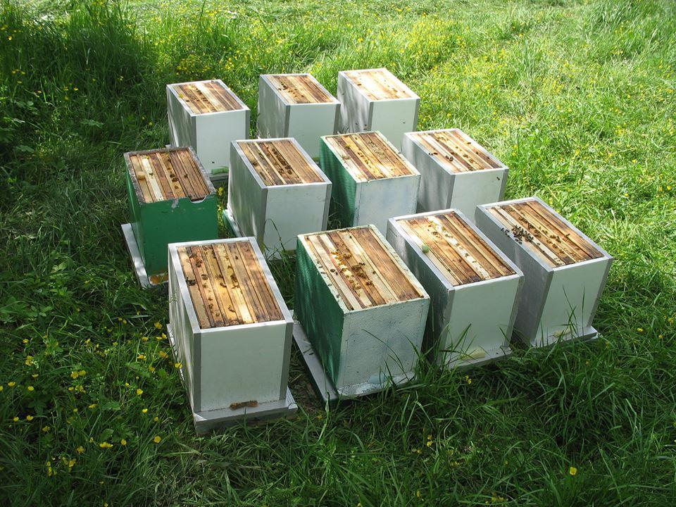 Odkłady pszczele 6 ramkowe