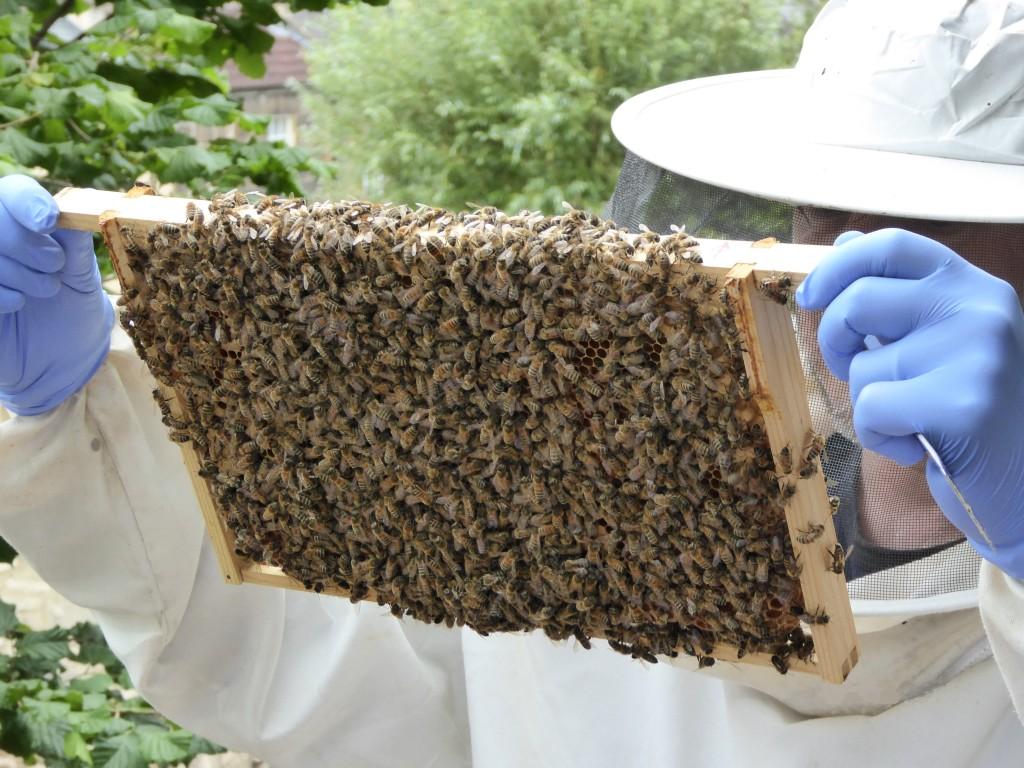 Ramka z pszczołami na czarno